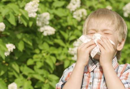 Child with hayfever sneezing into tissue