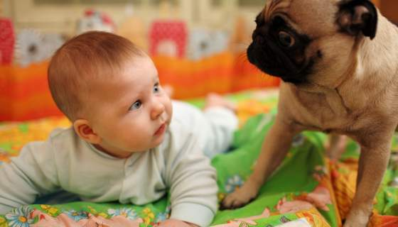 How To…Prepare your Pet for a New Baby