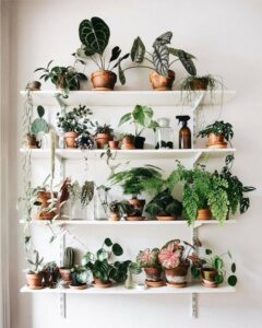 Leafy green potted plants on vertical white shelves.